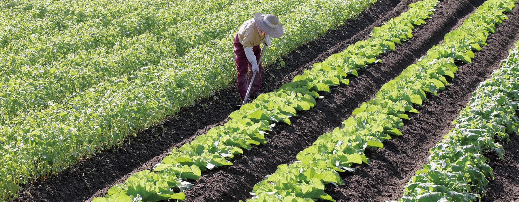 写真:農業と福祉の連携について
